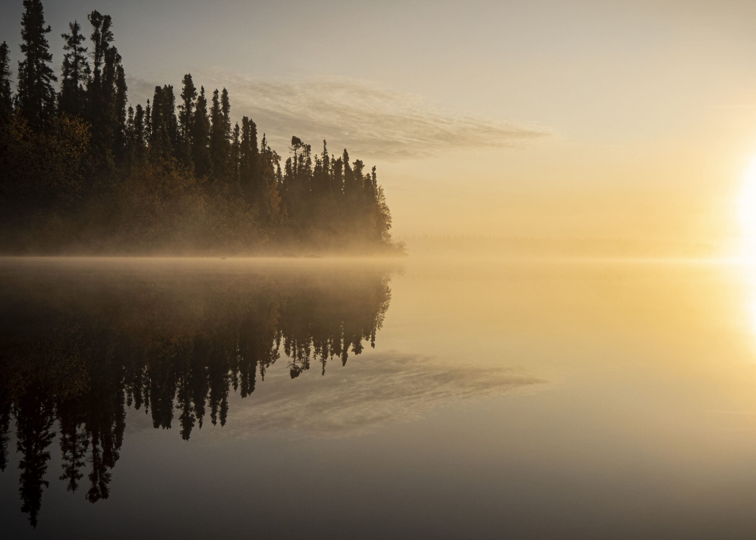 Reflection of trees in water at misty sunrise