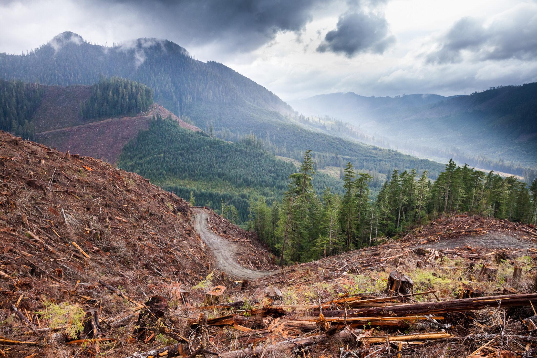 Walbran-Logging-W730-16