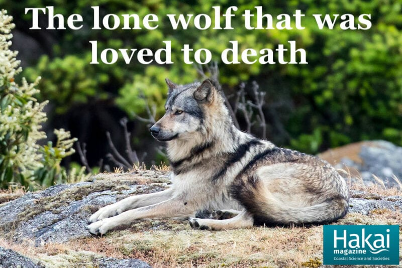 hakai article takaya the wolf