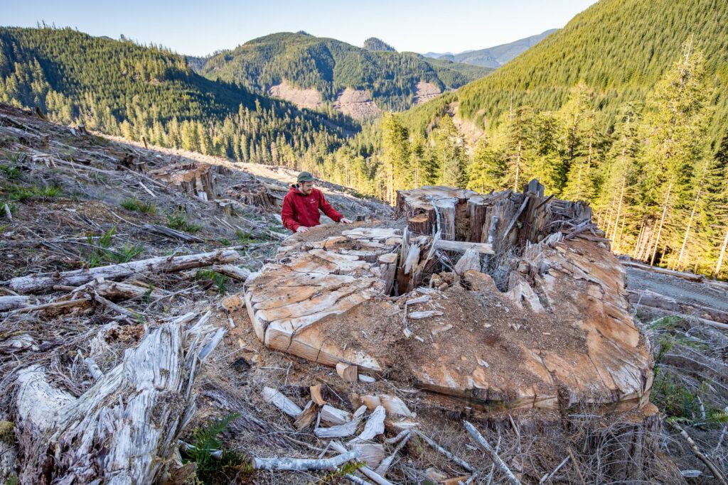 man beside stump in clearcut