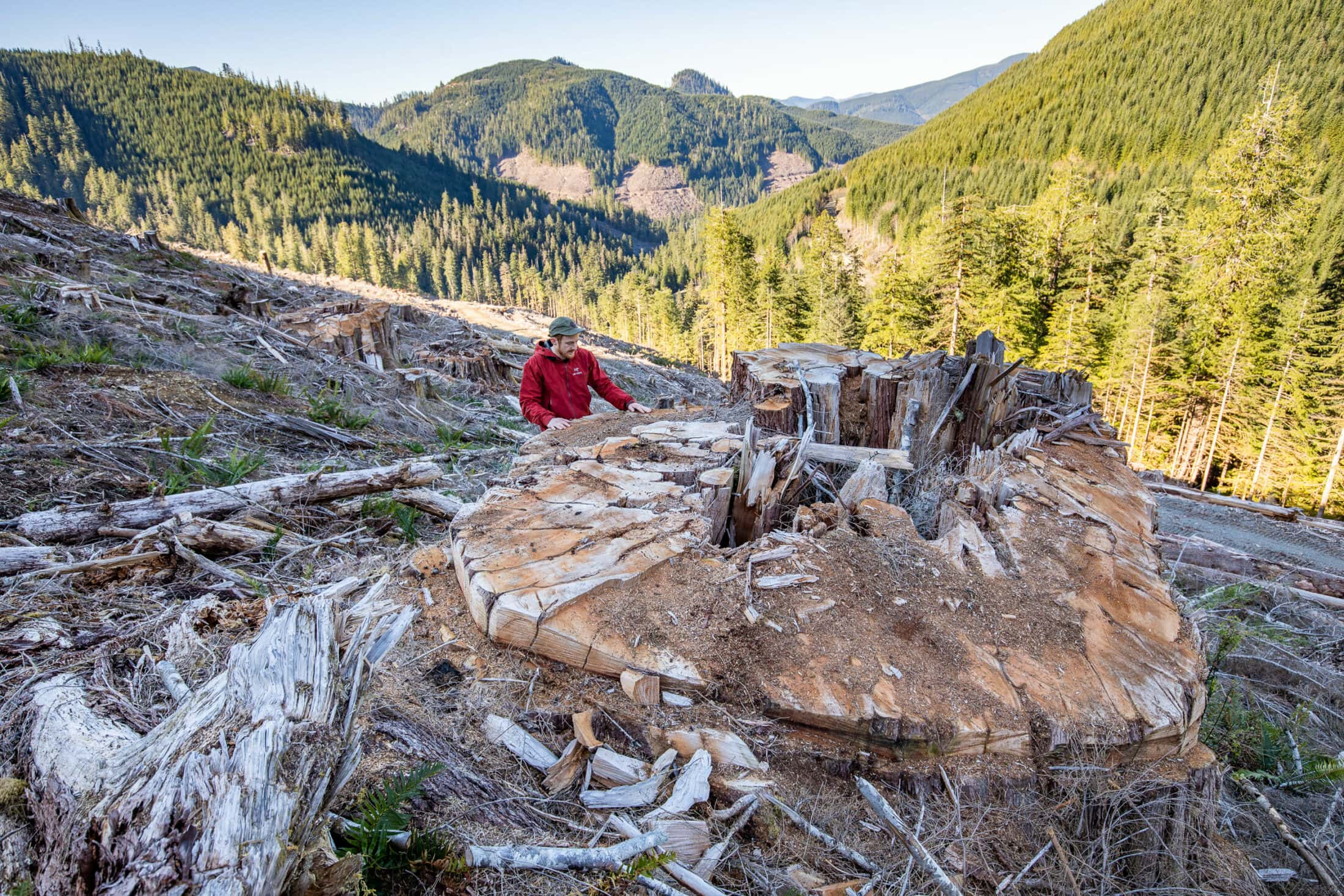 man beside stump in clearcut