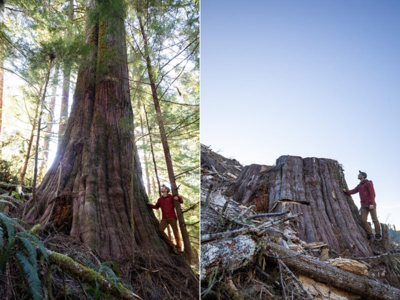 before and after photos of clear cut logging in BC