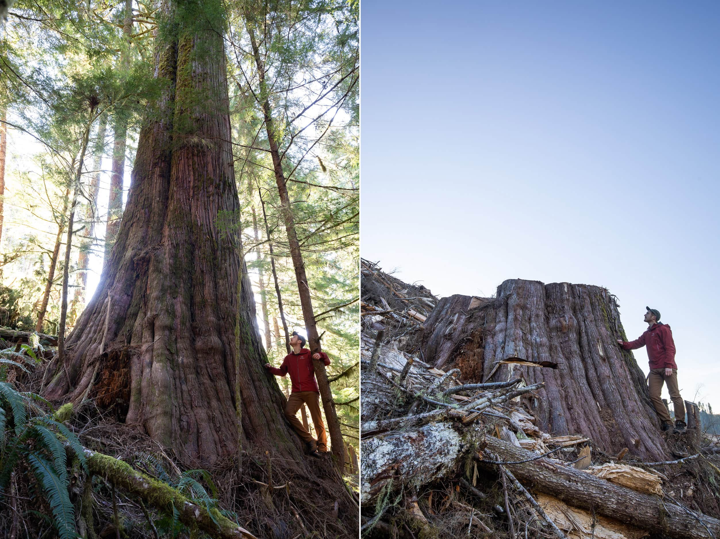 Caycuse-Before-After-Logging-2500px