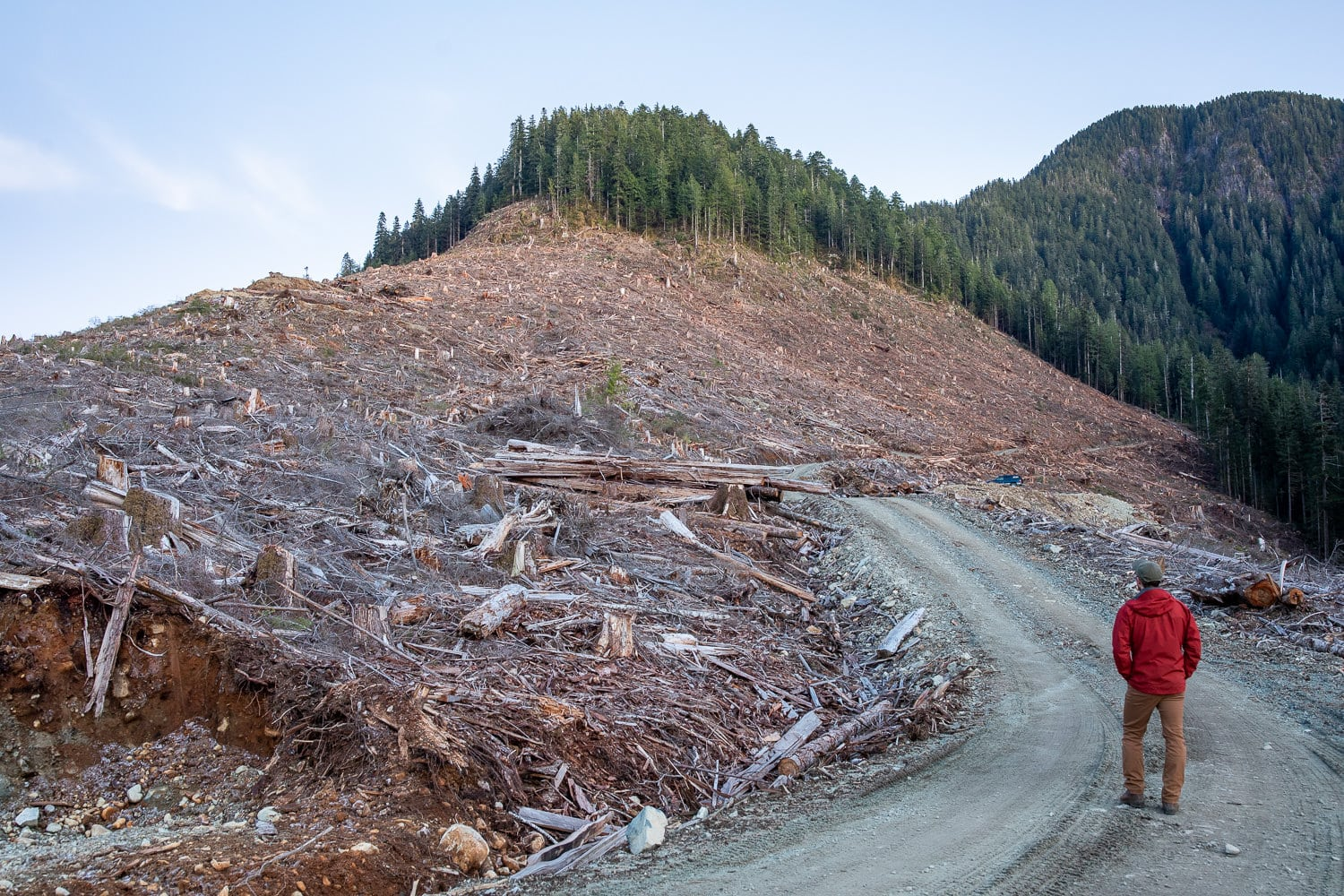 man standing in a clearcut