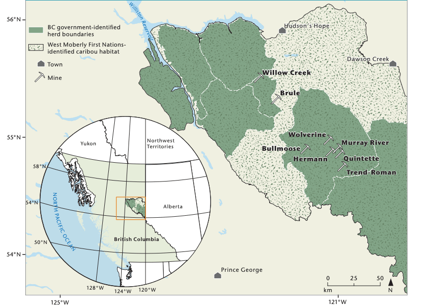 Central Mountain caribou habitat coal mines CCPA
