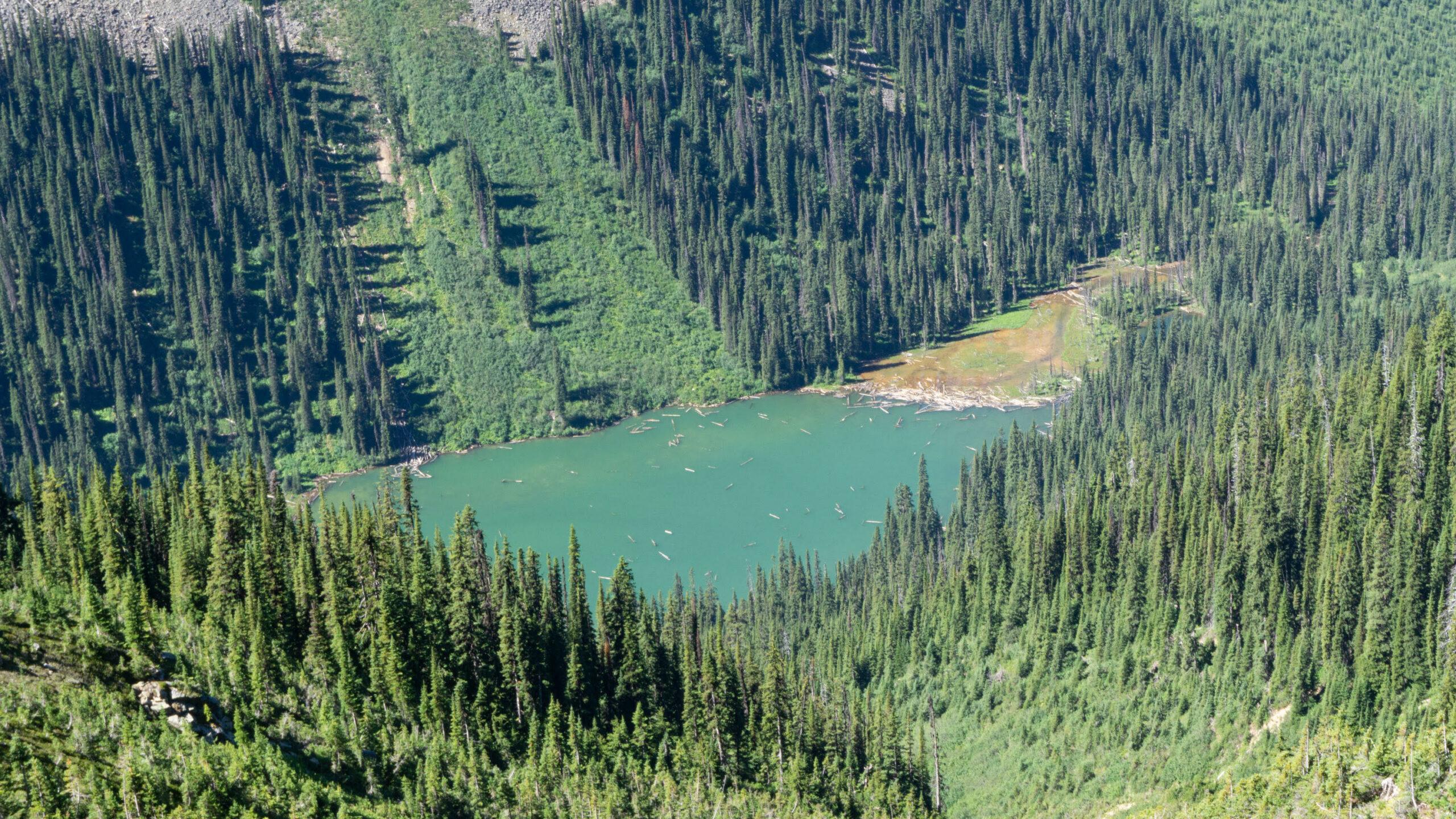Upper Argonaut Creek, B.C.