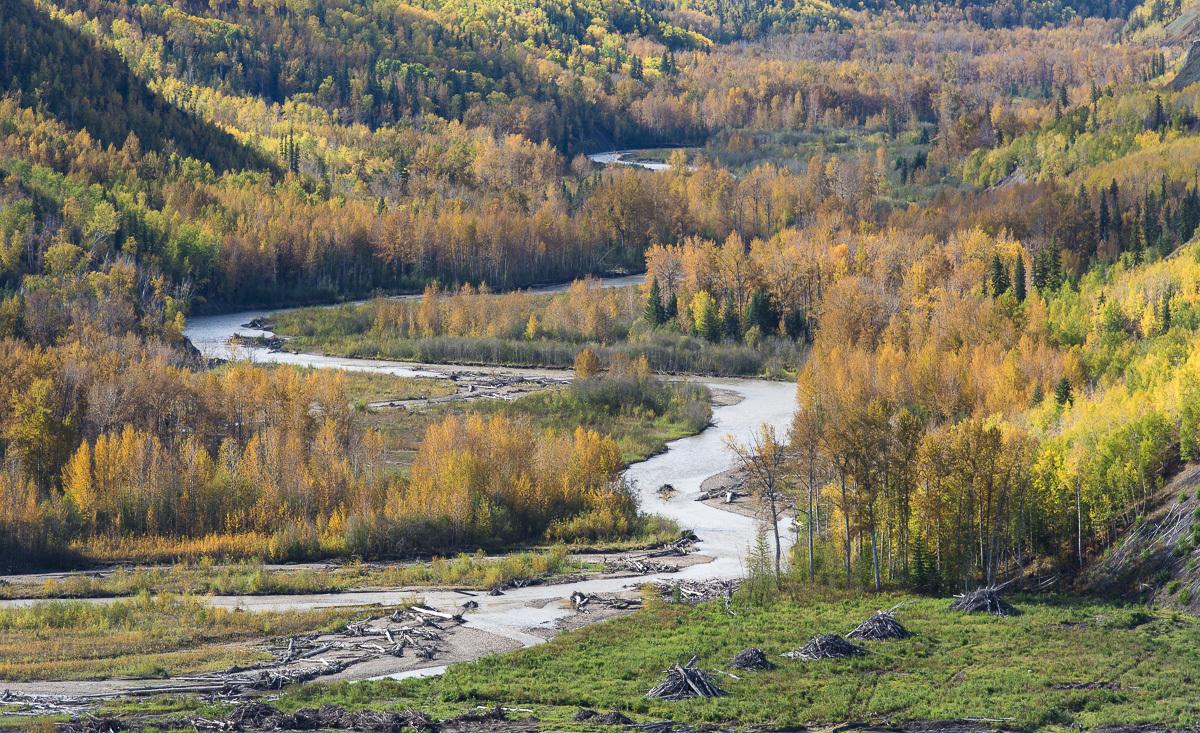Fall foliage around Moberly River