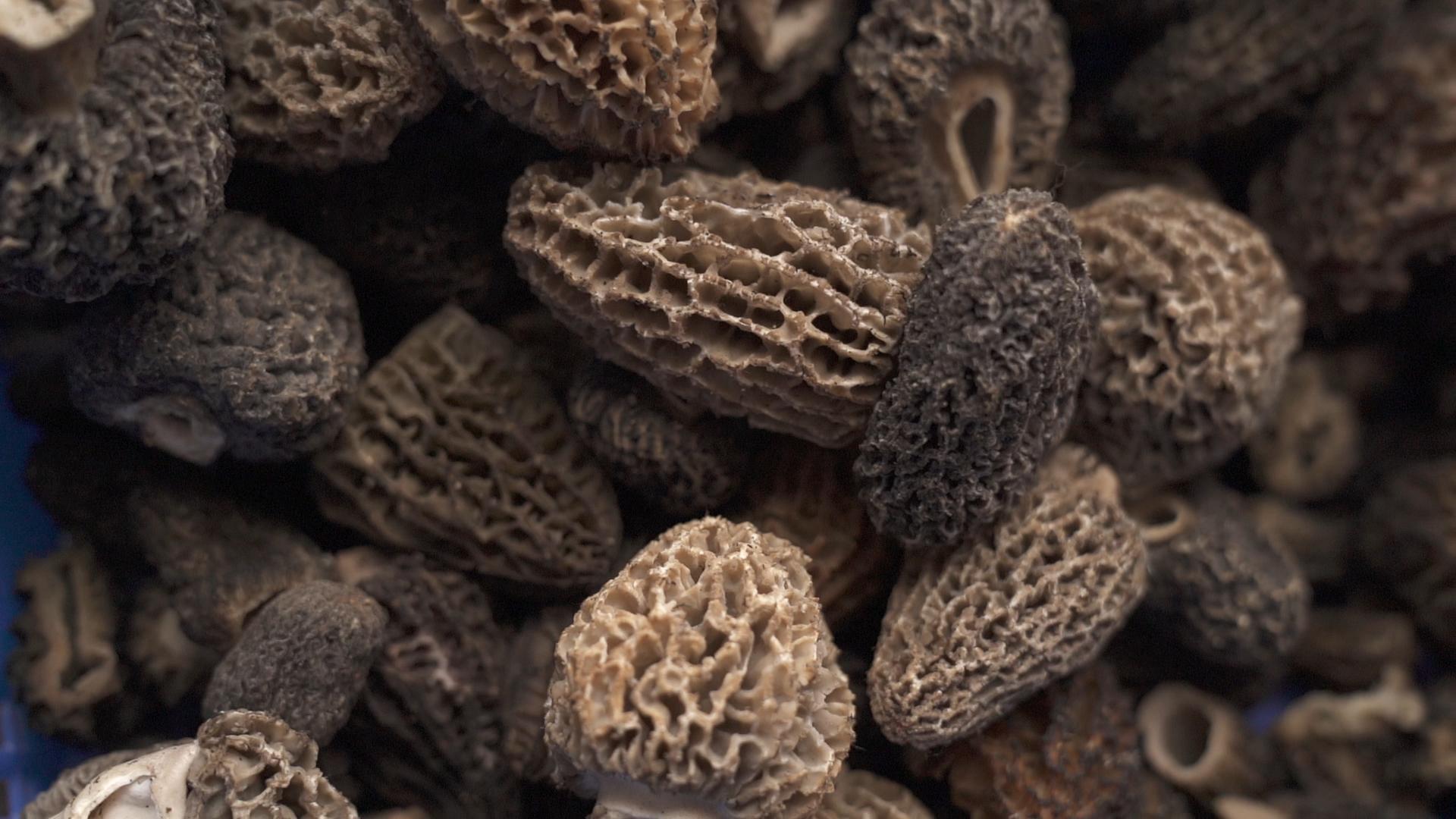 close up of morel mushrooms