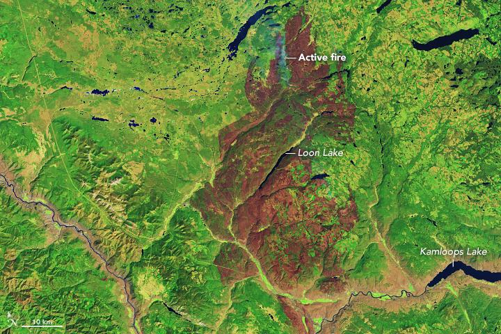 satellite image showing brown burn scar on green landscape