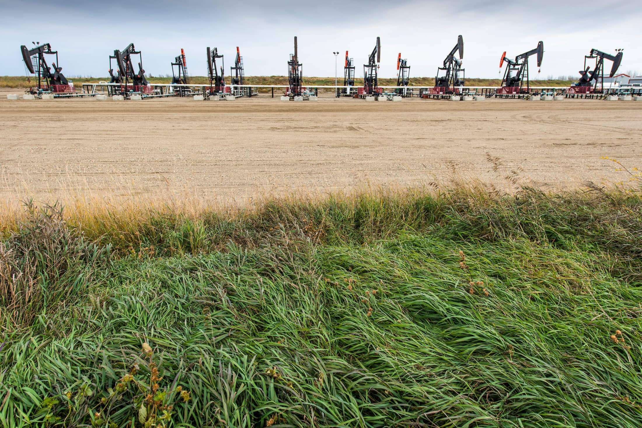 oil pumpjacks in a field