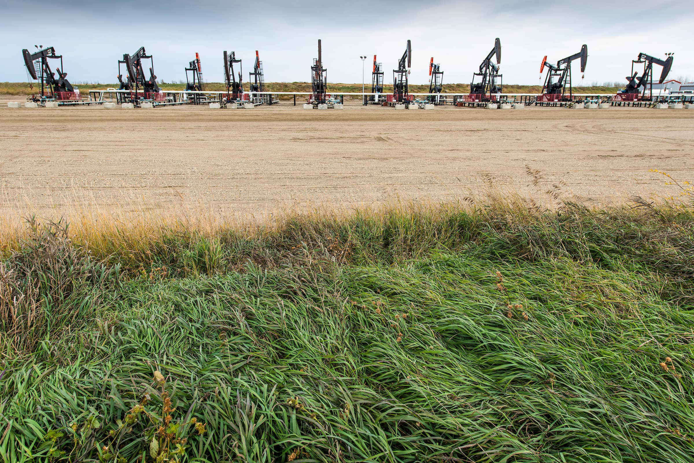 oil pumpjacks in a field