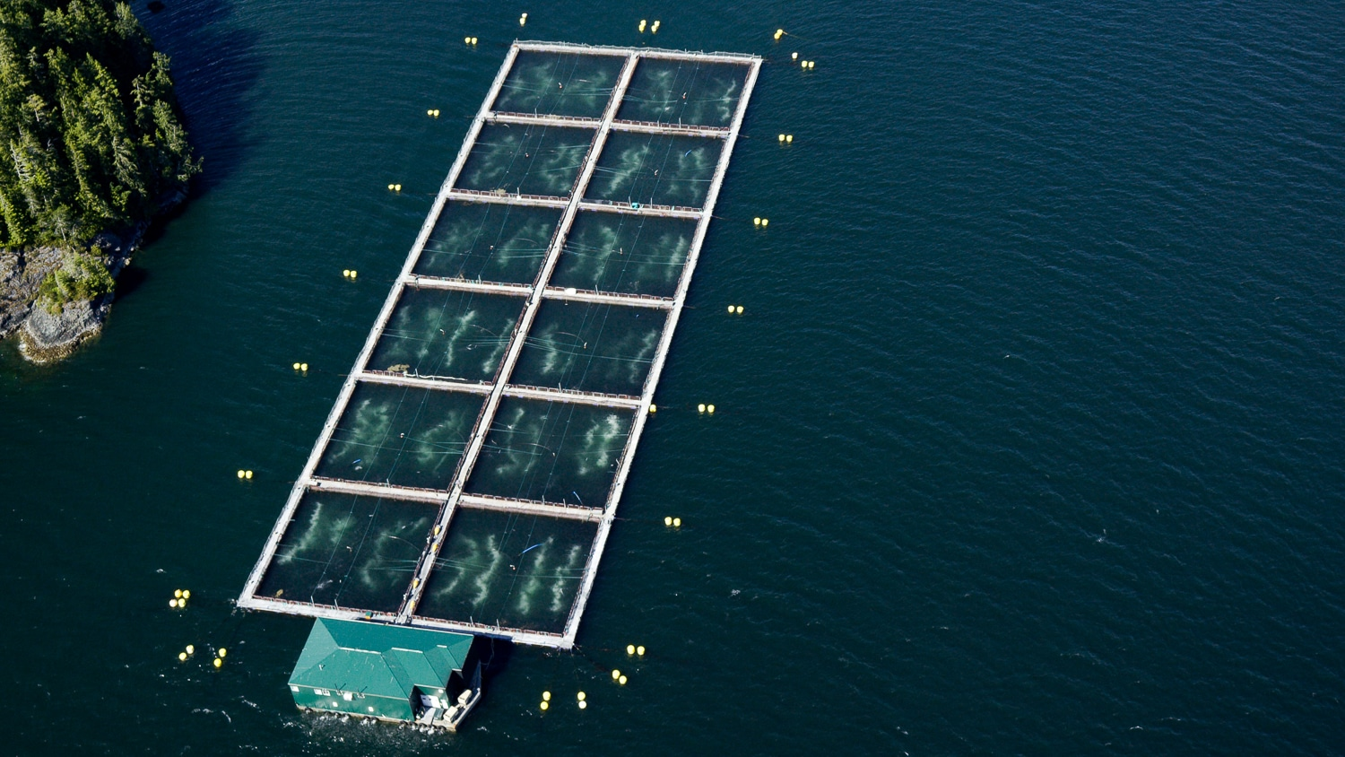An aerial view of a Cermaq's Fortune Channel salmon farm