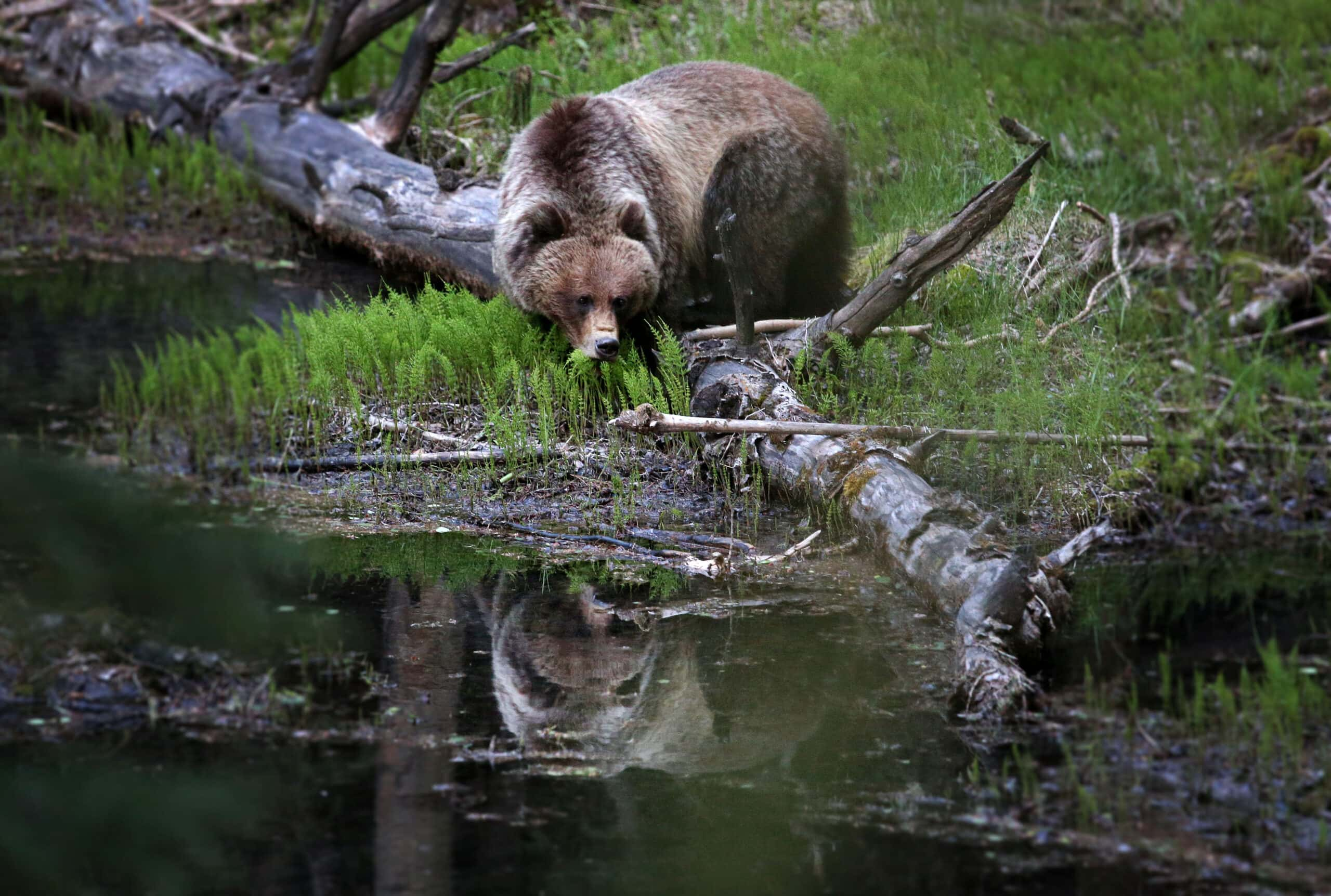 Bear 148