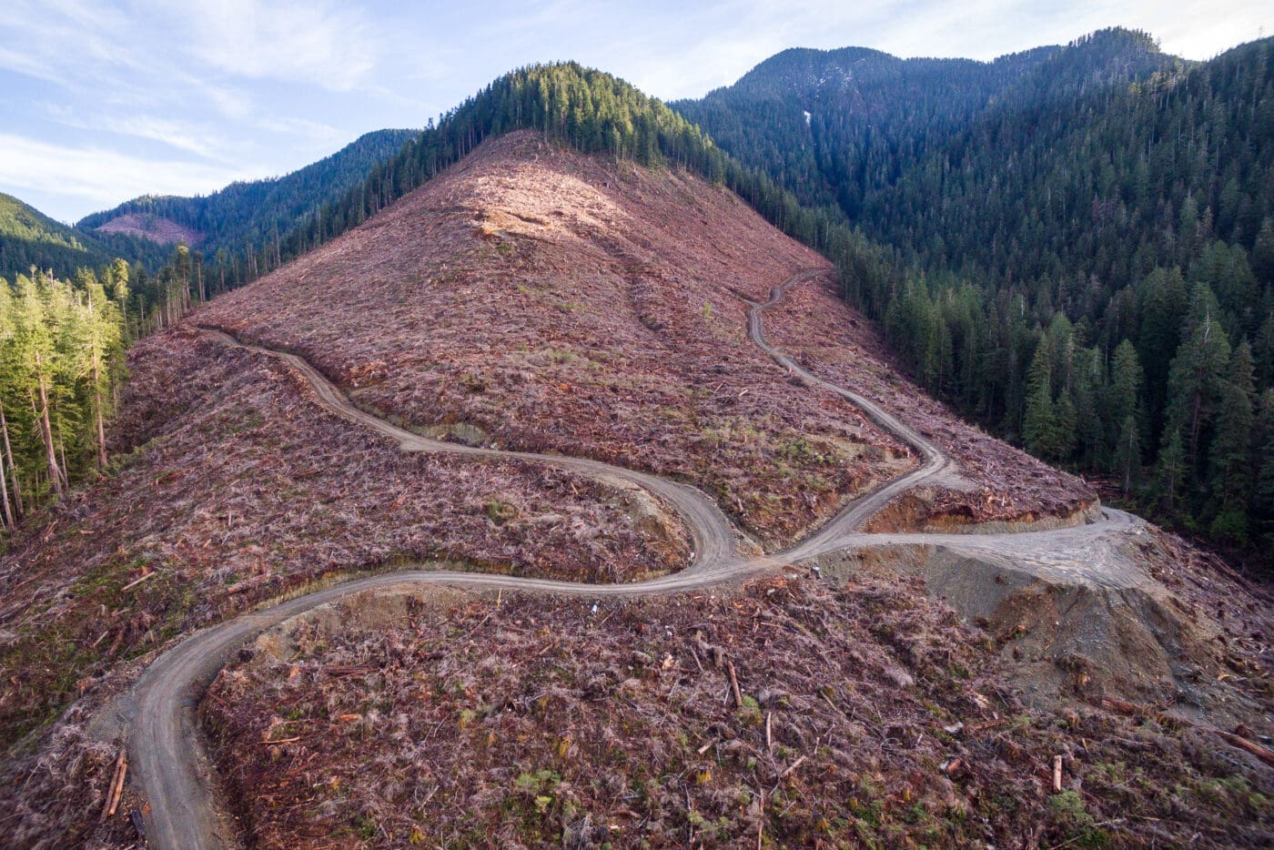 Caycuse-Valley-Old-Growth-Clearcut