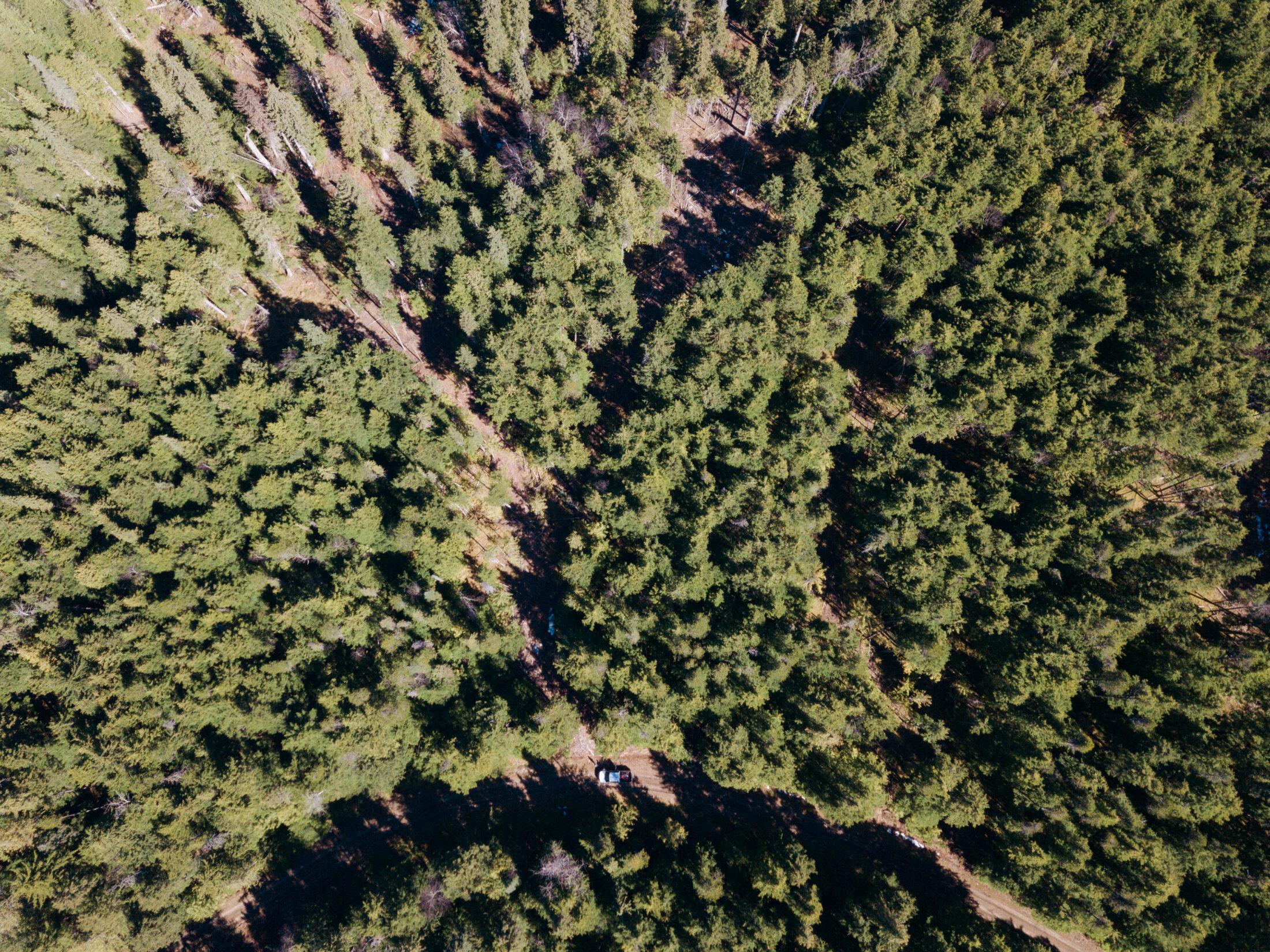 Kispiox valley selective logging