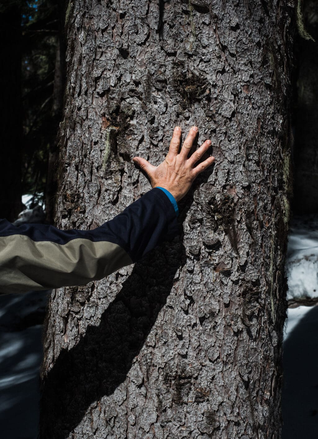 An outstretched arm with an open hand reaches towards the bark of a spruce tree