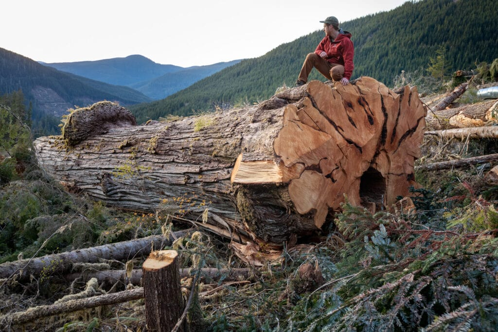 TJ Watt, co-founder of the Ancient Forest Alliance, crouches on an 800-year-old tree in the Caycuse watershed, where many old-growth logging protesters have been arrested in Fairy Creek blockades