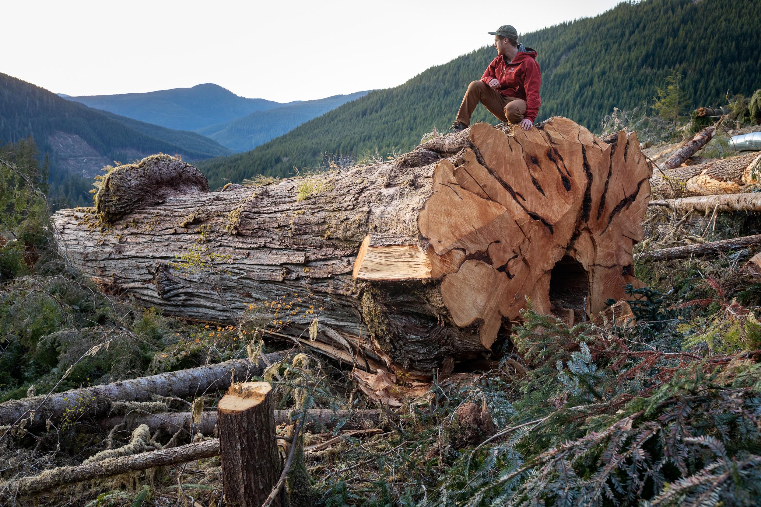 Caycuse-Watershed-800-Year-Old-Cedar-Log