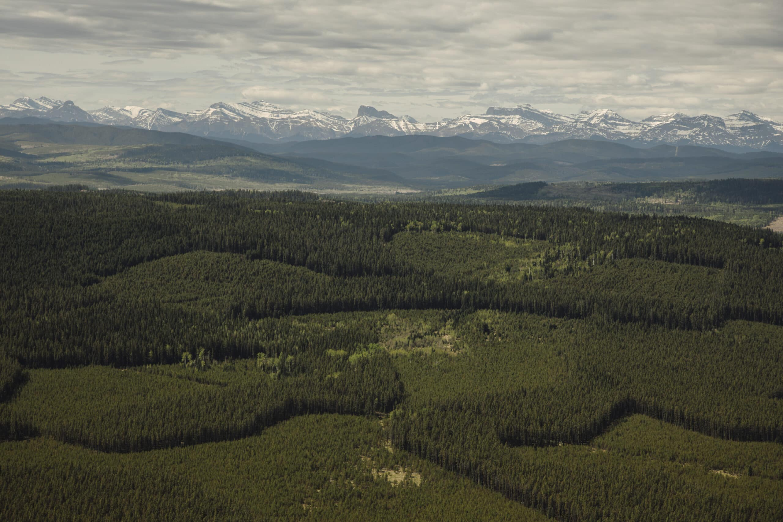 coal leases forestry eastern slopes Rocky Mountains