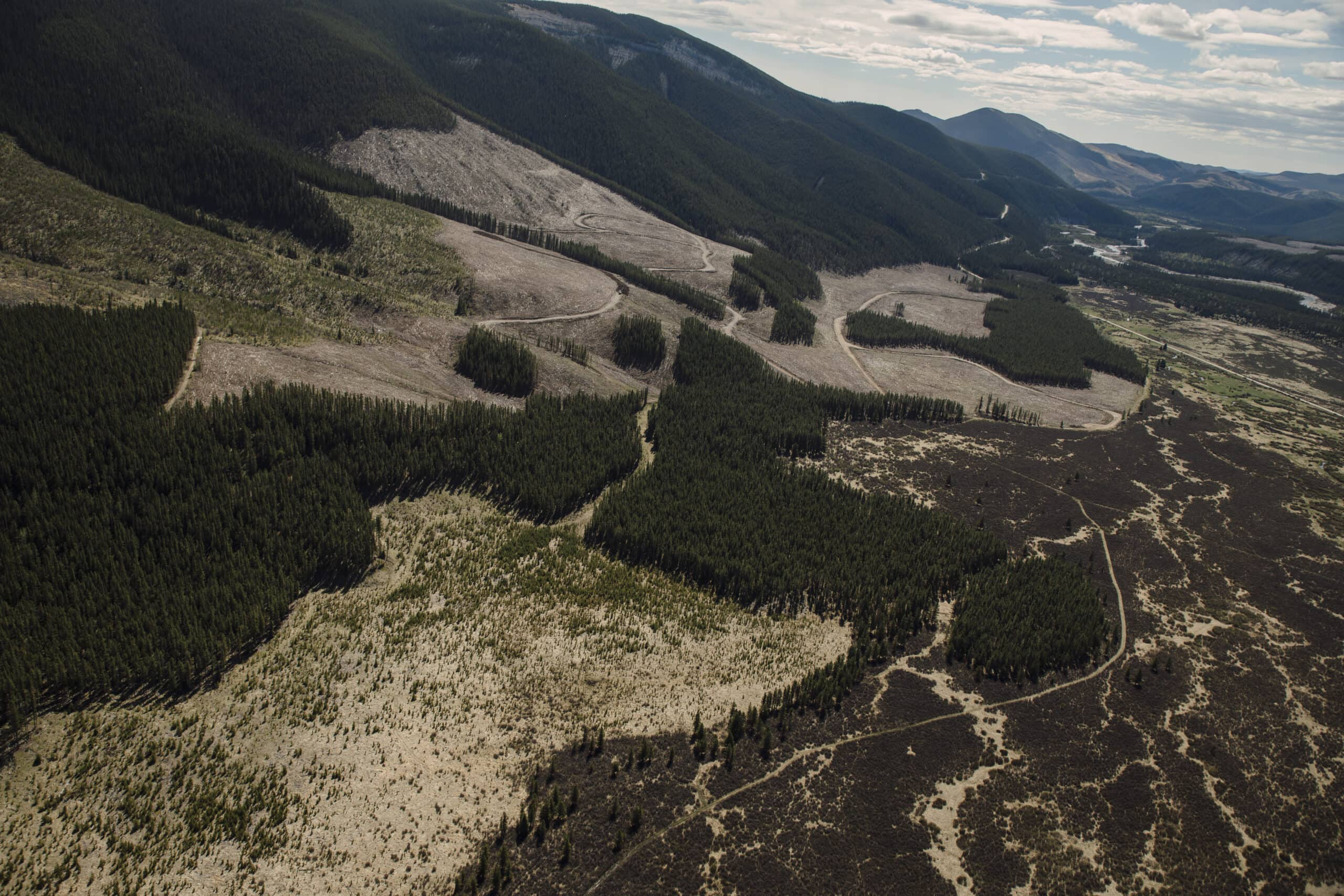 forestry cutblock coal lease eastern slopes Rocky Mountains