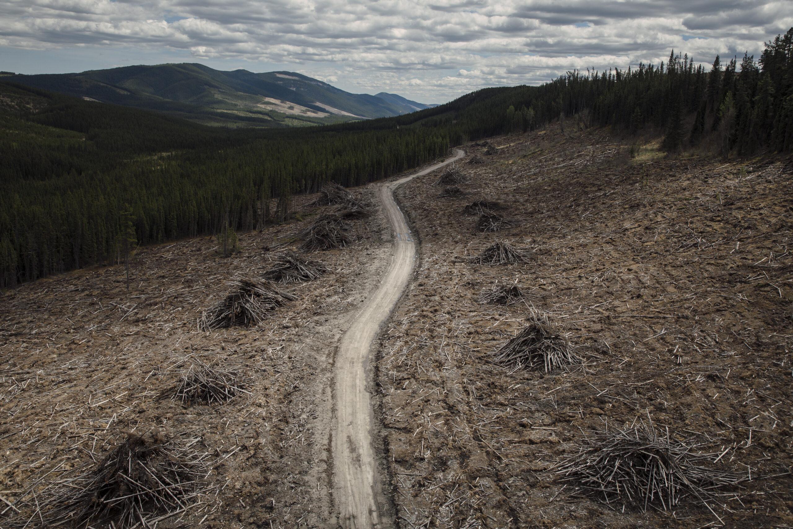 coal exploration eastern slopes Rocky Mountains