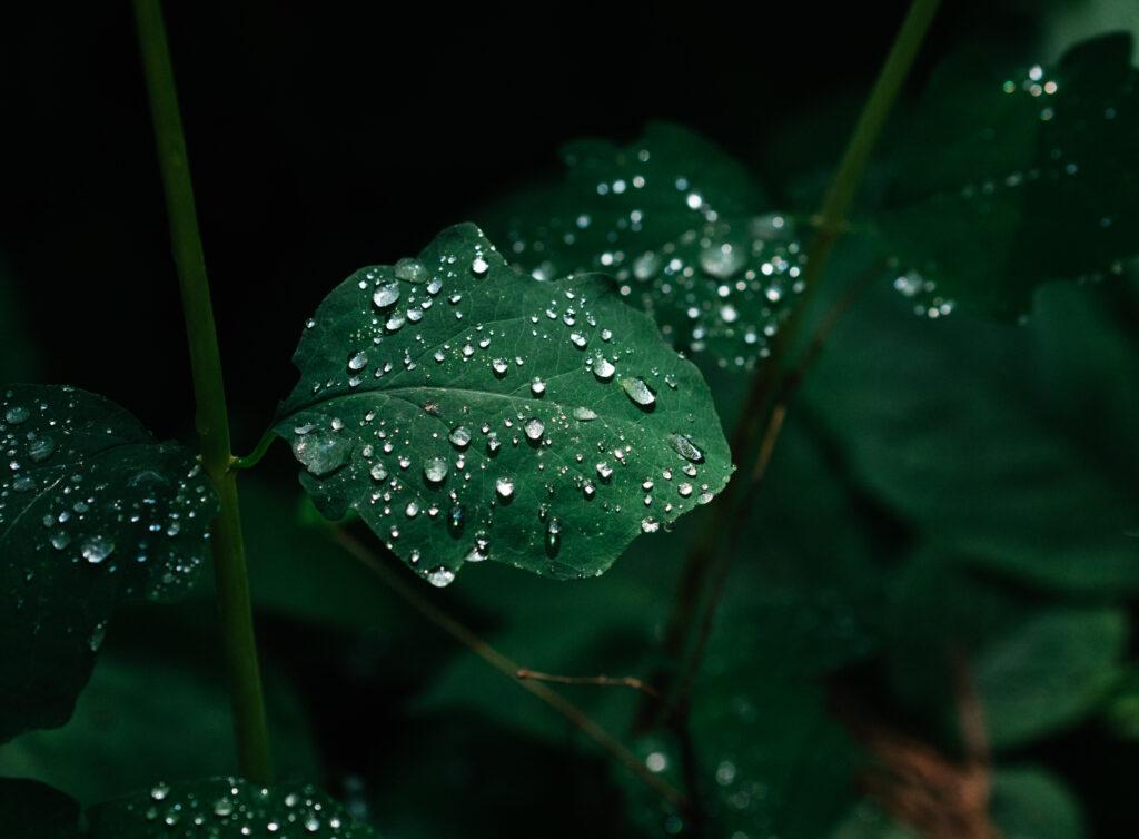 closeup of dew on a leaf