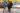 PacheedahtStory-Narwhal-TaylorRoades0176