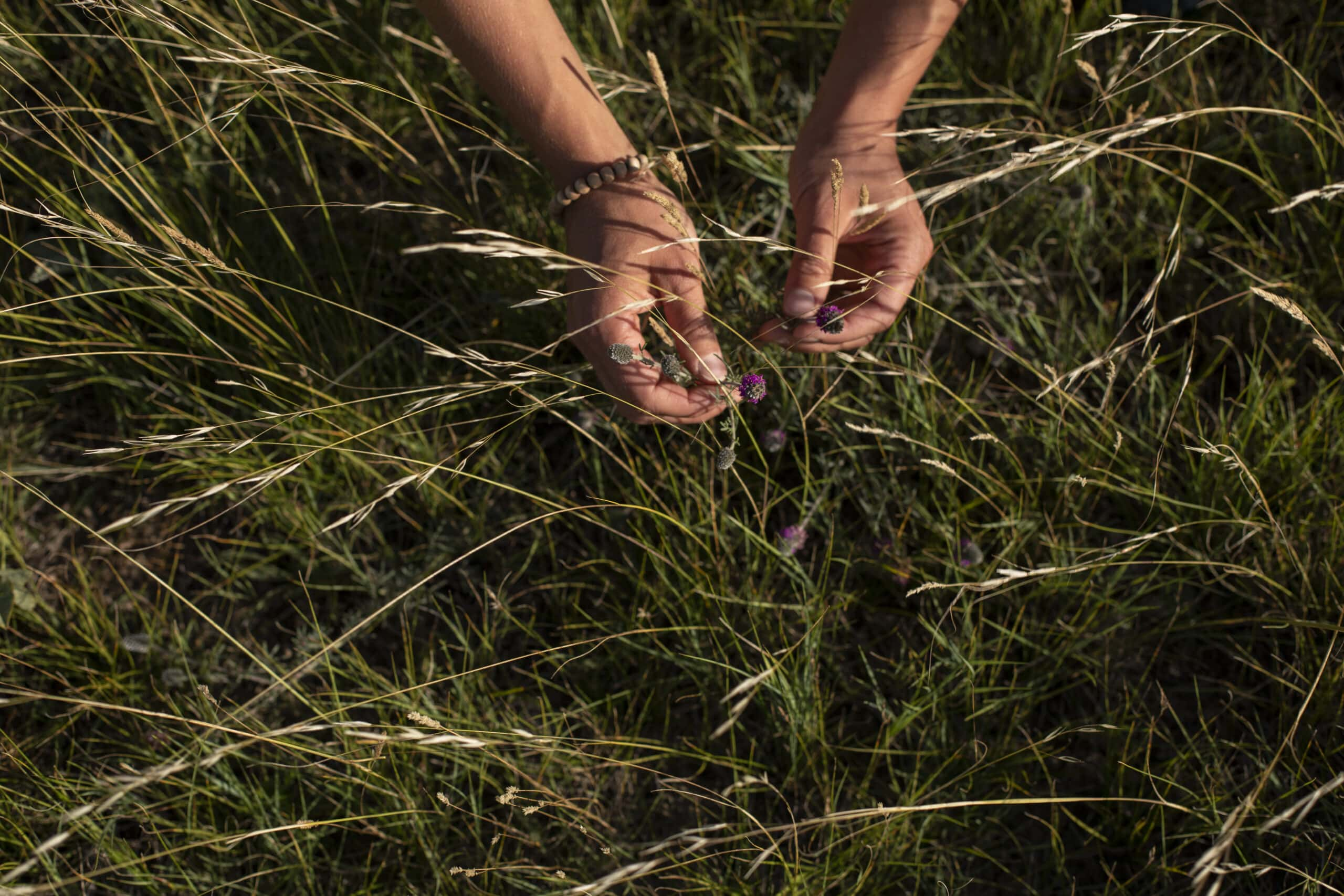 Federal election 2021: photo of person holding Purple Prairie Clover in prairie grasslands, featured in Arno Kopecky op-ed on voting