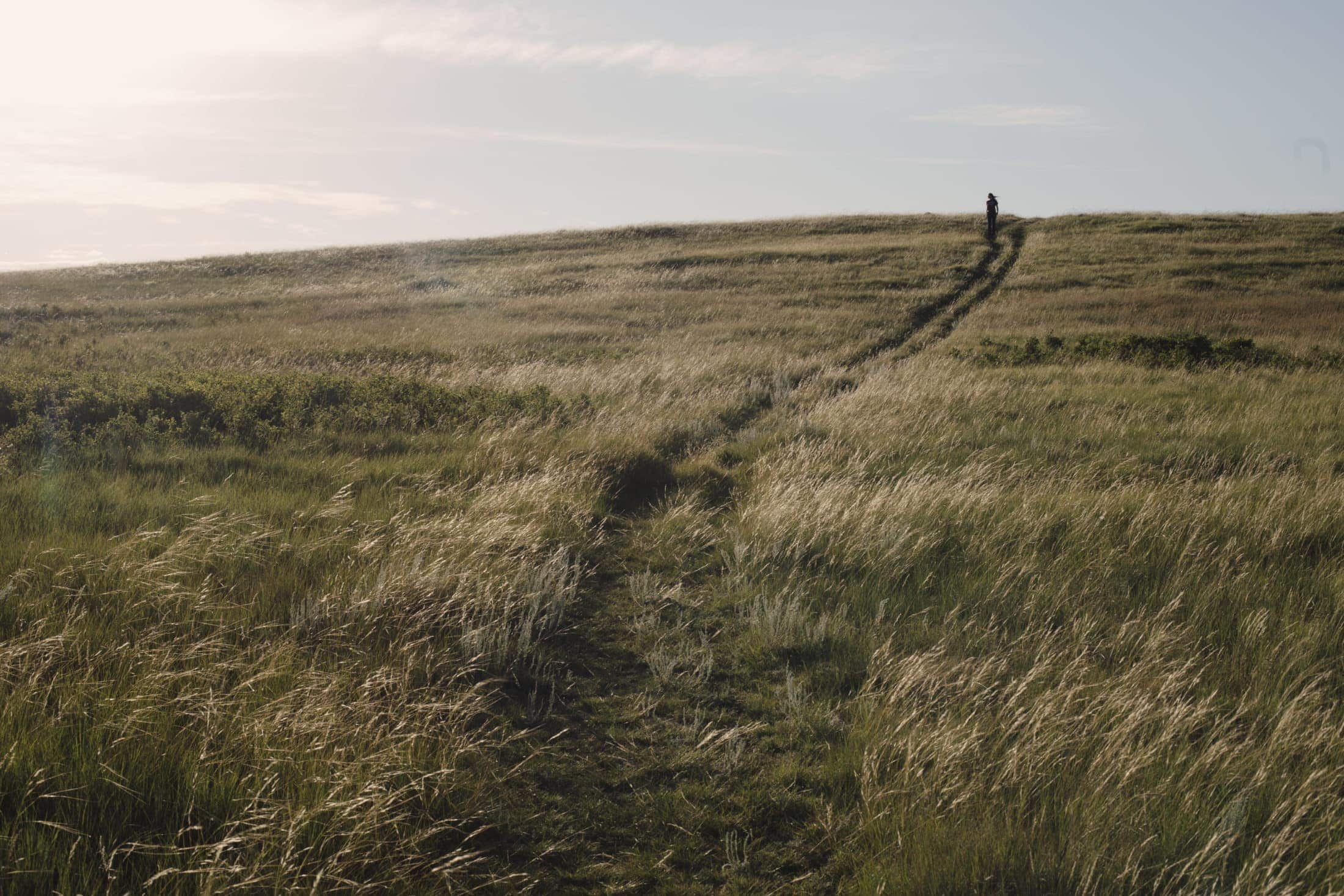Federal election 2021: a view of native prairie grasslands