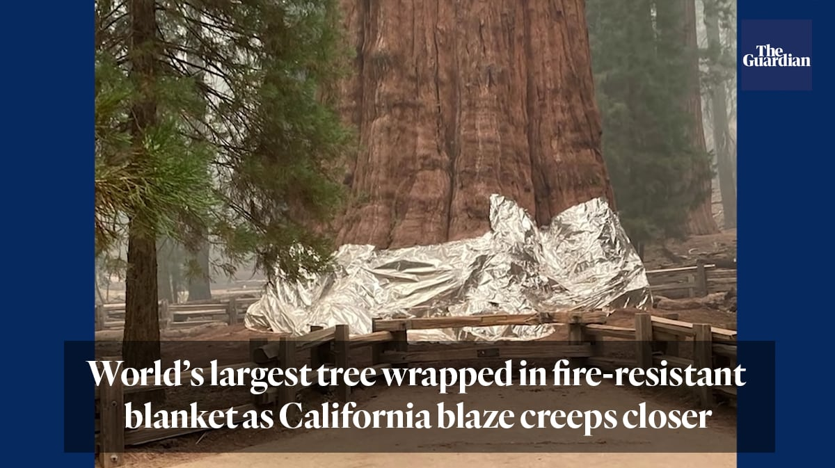 """""""World's largest tree wrapped in fire-resistant blanket as California blaze creeps closer"""""""