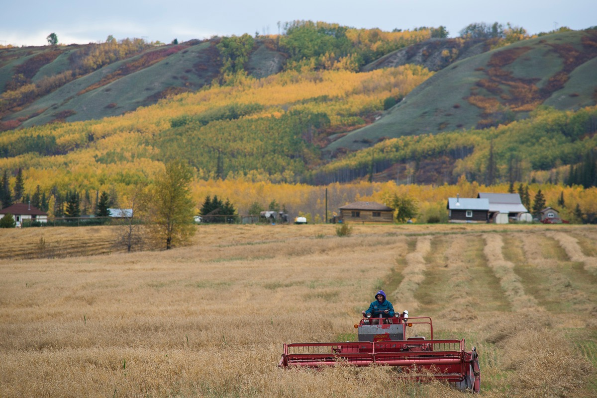 Arlene Boon harvesting at Bear Flats